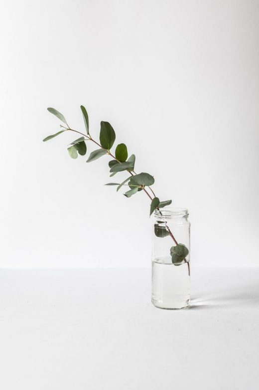 Antibacterial eucalyptus leaf in glass of water