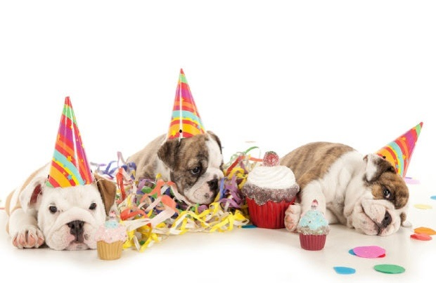 Sweet Cute Pets Birthday Quotes Wishes Sayings