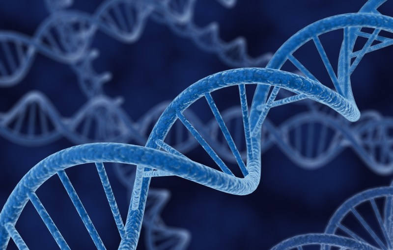 Is Calling in our DNA?