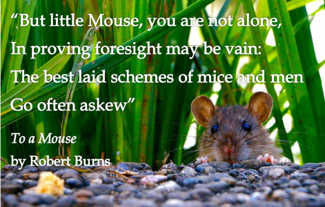 of mice and missionaries