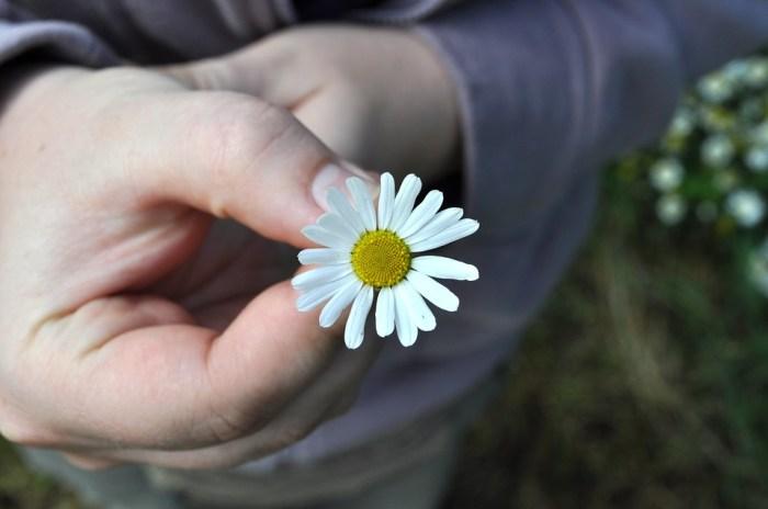 flower-1041044_960_720