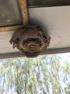 First bees nest