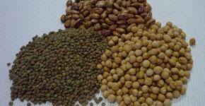 legumbres alubias lentejas garbanzos