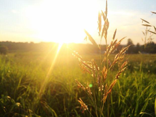 Remedios naturales contra la alergia estacional