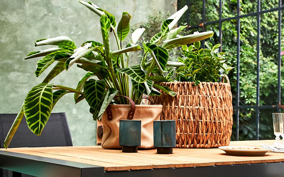 cache pot et plante de jardin alinea