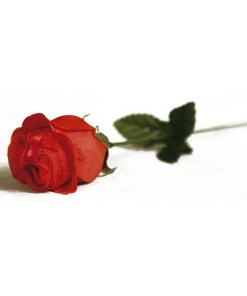 Calcinha na Flor Perfumada Aline Lingerie