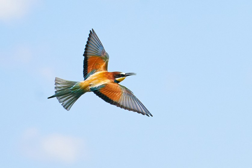 Sony A9 Hands On Bee Eater