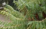 Gartenschere zum Sträucher schneiden
