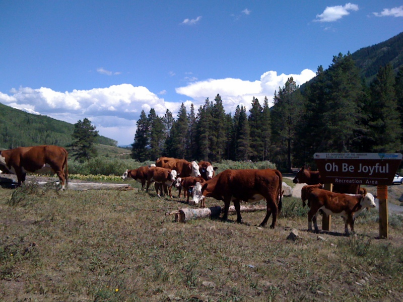 Oh Be Joyful Campground Crested Butte Colorado