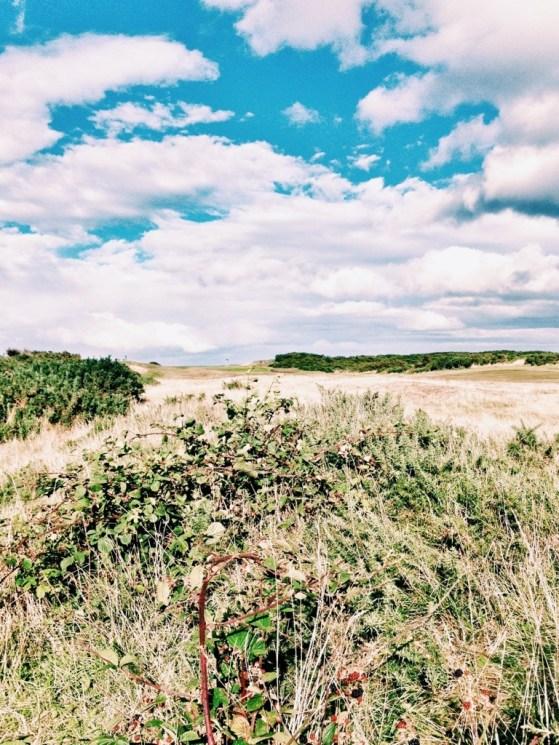 Blackberries by the North Sea Walk