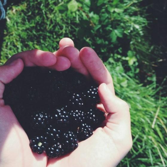 Blackberries on our North Sea Walk