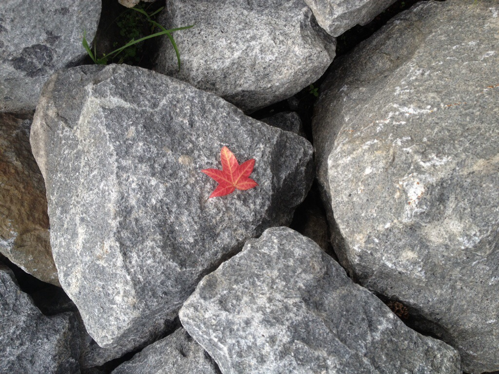 In The Pipeline, Red leaf gray rock