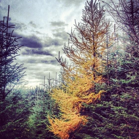 Bennachie In November, Hiking In Scotland With Kids