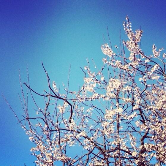 Spring, In The Pipeline