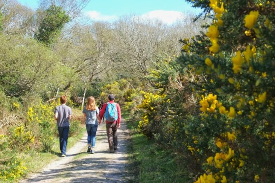 Tomies Mountain Walk, County Kerry, Killarney, Ireland, Walks, #48walks