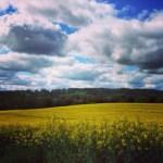 Snapshots of Yellow