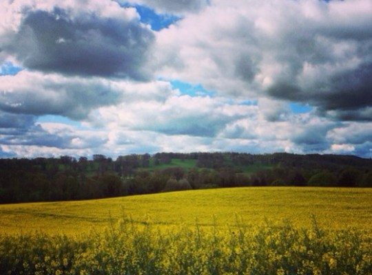 Snapshots of Yellow Fields, Rapeseed Fields, British Countryside, St Cuthberts Way