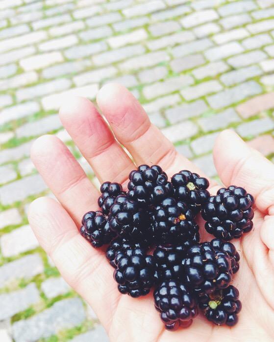 Blackberries, Scotland, Blackberry Cobbler