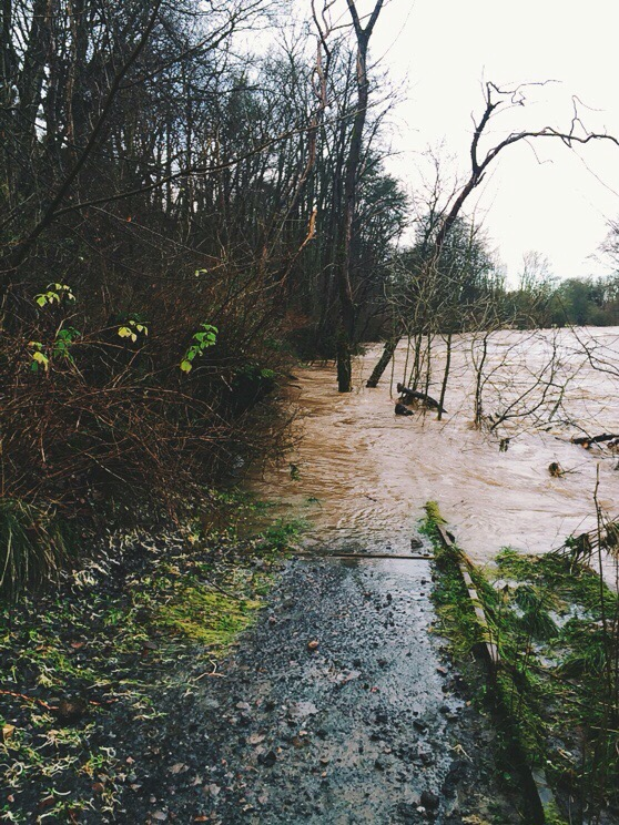 River Don, Flooding, January 2016, In the Pipeline