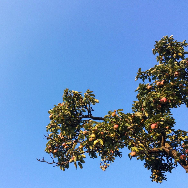 Apple tree in Germany, Snapshots of Tubingen