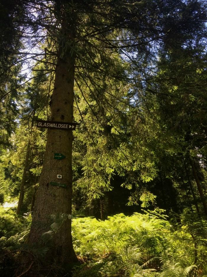 Black Forest 06
