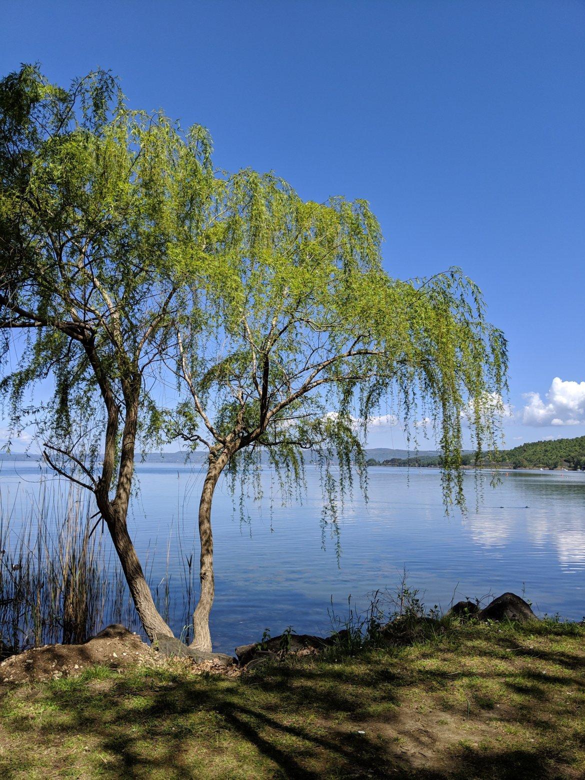 Lake Bolsena: Driving tour around the lake from Montefiascone