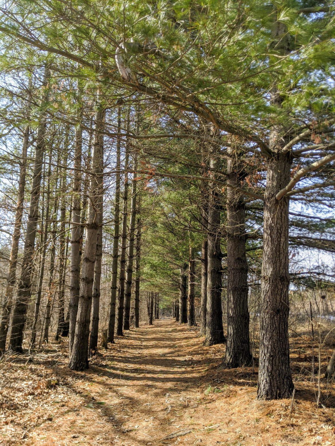 keep walking, forest, on pilgrimage