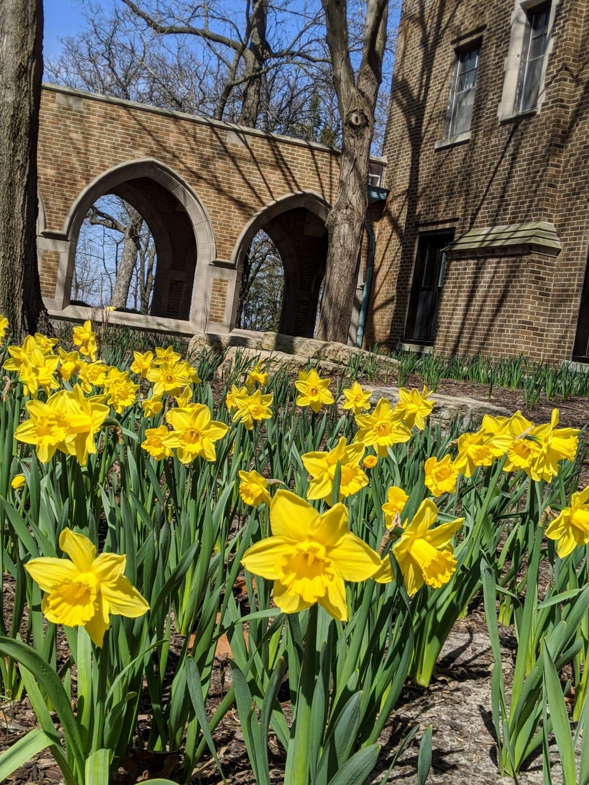 Spring at Augustana1