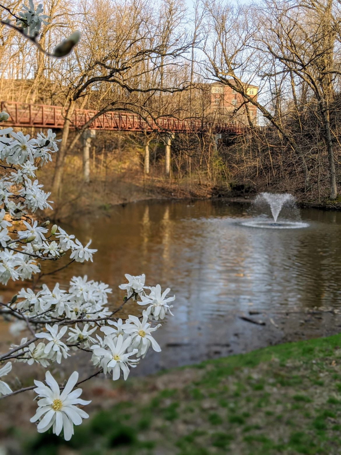 Spring at Augustana2