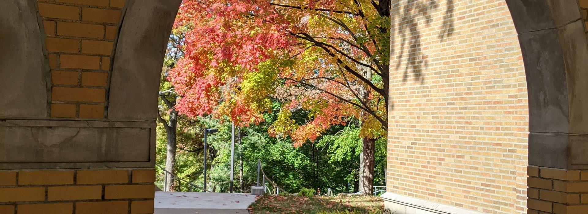 Autumn at Augie