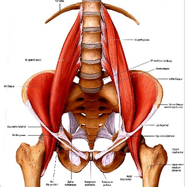 How to Psoas Release… or Not!