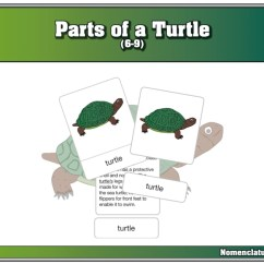 Turtle Shell Anatomy Diagram Circuit Maker Parts Of A Pictures To Pin On Pinterest - Pinsdaddy