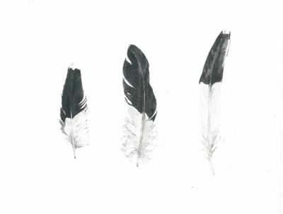 feathers 100dpi