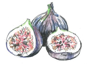 figs colour