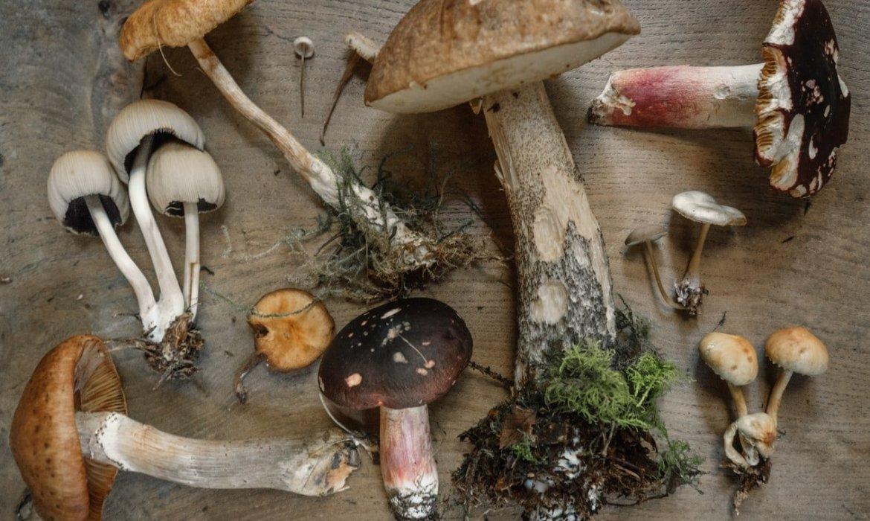 pile of assorted mushrooms