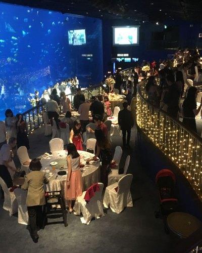 S.E.A Aquarium Wedding Live Band