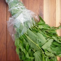 Natural Allergy Relief with Stinging Nettle Tea