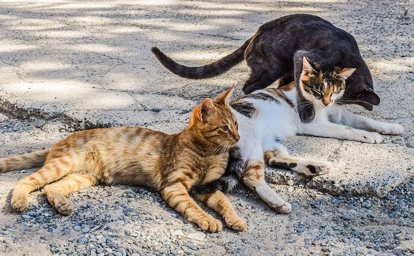 Colonias felinas.