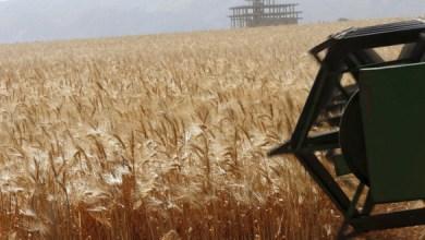 Photo of في ظل قلق فرنسي: الجزائر تفارض روسيا لاقتناء كميات هامة من القمح