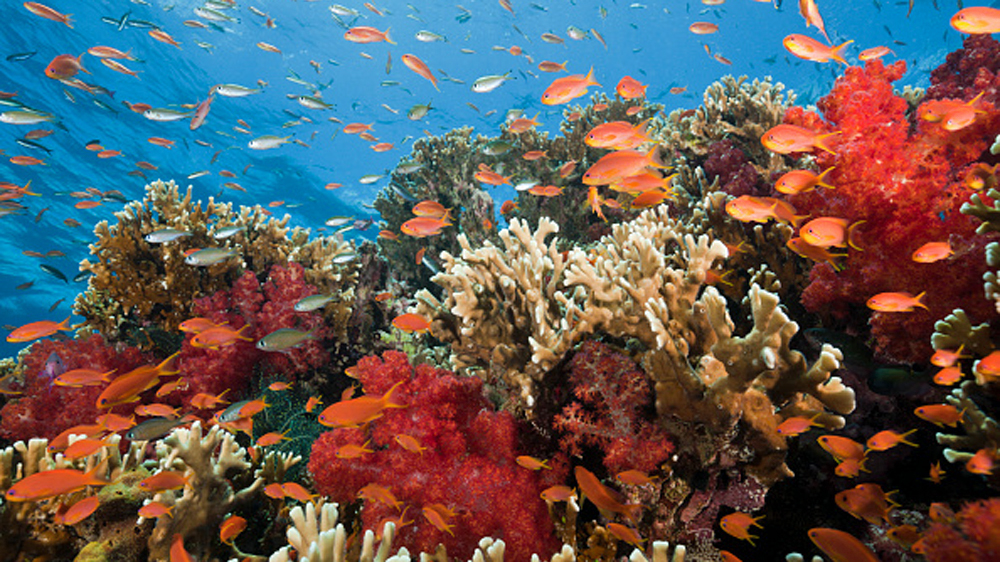 Fiji PM: 'We are losing the battle' to save coral reefs ...