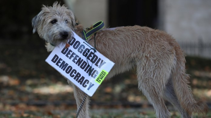 An anti-Brexit placard is attached to a dog in London, Britain, September 4, 2019.
