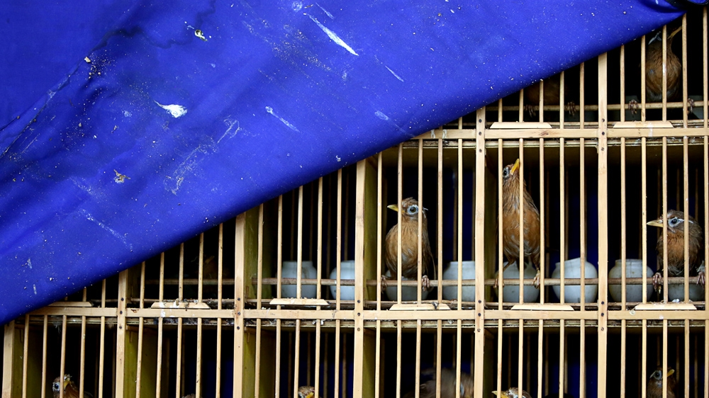 China wildlife trade