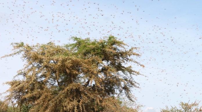 Grasshopper desert, Uganda / DO NOT USE