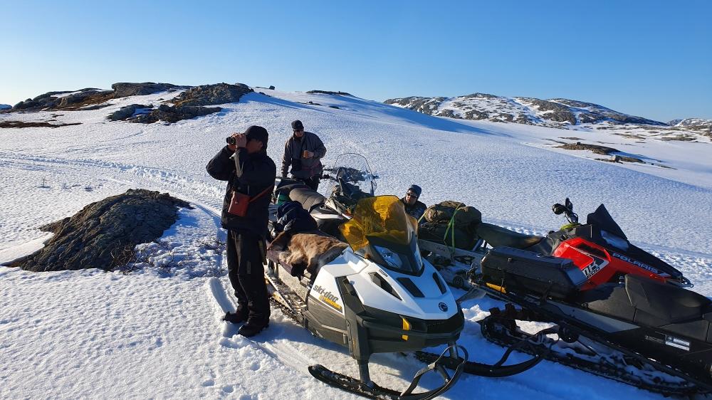 Saami herders watching over their reindeer herd