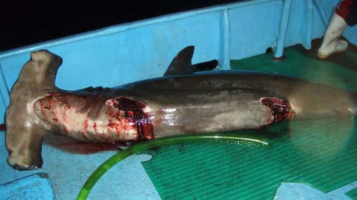 Image result for shark fin fishing