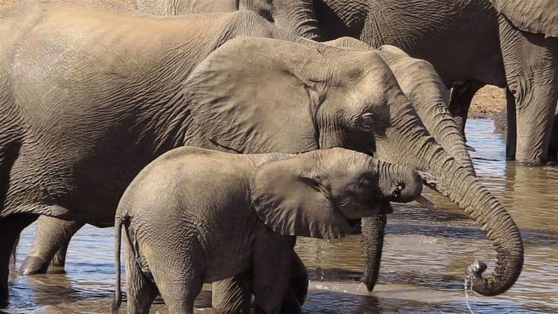 wild and endangered animals