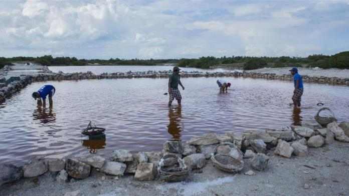 Workers collect salt from a lagoon during a salt harvest in Mexico, where the informal economy especially large [File:Koral Carballo/Bloomberg]
