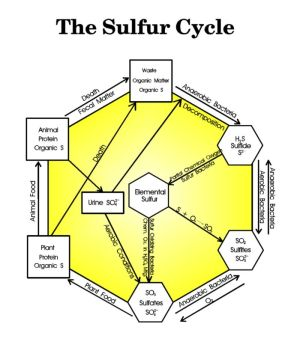 Sulfur Cycle Diagram  by Ken Edwards, Jr  AlkenMurray Corporation