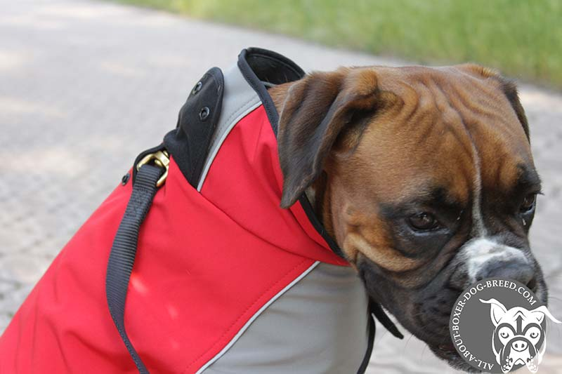 Boxer Winter Coat To Warm Your Favourite Pet H14