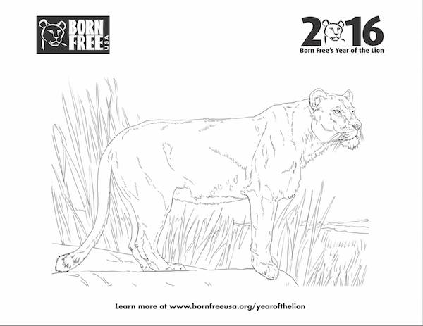 Born Free's Lion Activities and Lesson Plans for Kids